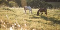 Southern Cross Horse Treks Australia - Kerewong Horse Holiday Farm NSW