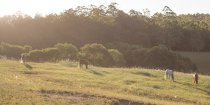 Kerewong Horse Riding Holiday Farm NSW Southern Cross Horse Treks Australia