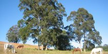 Kerewong Horse Riding Farm NSW Country Trail Riding Holidays Australia