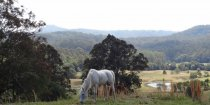 Endurance Arabian Horse Riding Adventures Holiday Farm NSW Australia