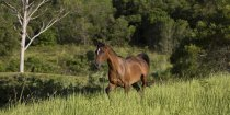 Southern Cross Horse Treks Australia - Kerewong Horse Riding Farm NSW