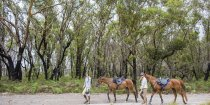 Horse Riding Holidays Beach Ride NSW - Horse Treks Australia