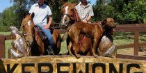 Horse Riding Farm Holiday Australia NSW