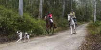 Australian Bush Horse Riding Australian NSW North Coast