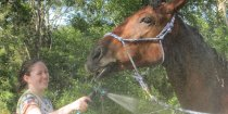 Horse Care Australian Horse Riding Kerewong Farmstay Port Macquarie Hinterland