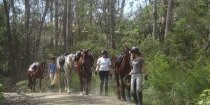 Leading Horses Down Comboyne Peak NSW Australia Horse Tours
