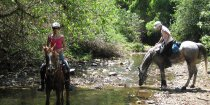 Horse Riding Adventure Tours Horse Treks Australia NSW Mid North Coast