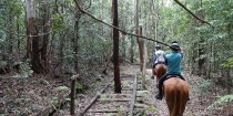 Adventure Horse Riding Treks Historic Timber Railway Line NSW Australia