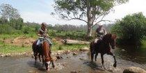Horses Playing At NSW Australia Farmland Creek Crossing