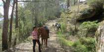 Comboyne Mountain Decent Horse Treks Australia NSW Adventure Tours