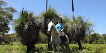 Horse Treks Australia Experience Bush And Beach Horse Riding NSW