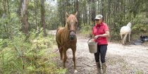 Well Cared For Endurance Trail Horses - Southern Cross Horse Treks Australia
