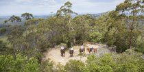 Horse Riders On Comboyne Mountain, Horse Riding Holidays Australia