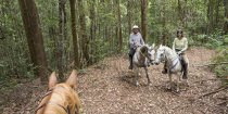 Experienced Riders Horse Treks Australia NSW Bush Horse Trails