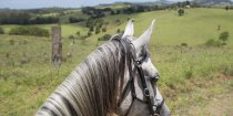 View Of Comboyne Plateau From Horseback Mid North Coast Hinterland NSW Australia