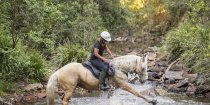 Palomino Part - Arabian Horse - Creek Crossing Horseback Riding Tours NSW Australia