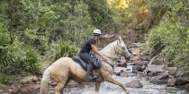 Palomino Mare - Creek Crossing Horseback Riding Tours NSW Australia
