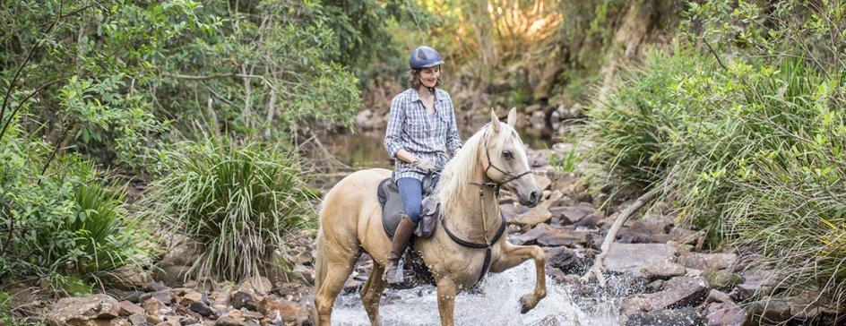 Finesse - Horse Riding Holidays Australia Port Macquarie Hinterland NSW