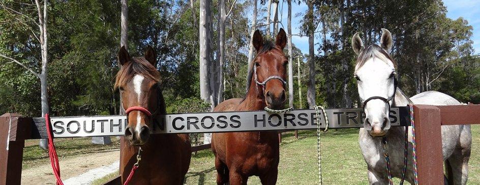 Southern Cross Horse Treks - Horse Riding Holiday NSW Australia