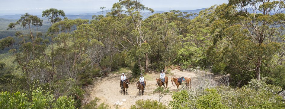 Horse Riders On Comboyne Mountain, Horse Riding Holidays Australia