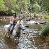 Manni - Arabian Trail Horse At Southern Cross Horse Treks Australia Adventure Holidays